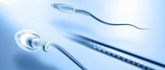 Sperm and antioxidants