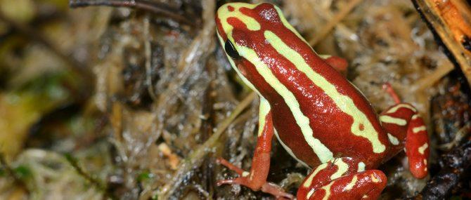 Frog test