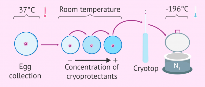 Cryopreservation & Vitrification of Embryos, Sperm & Eggs