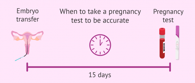 When to test for pregnancy after IVF embryo transfer