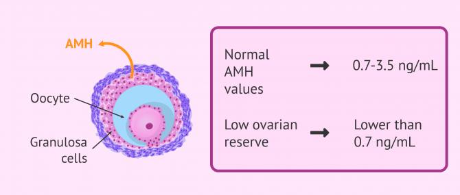 Imagen: Anti-Mullerian Hormone (AMH) secretion