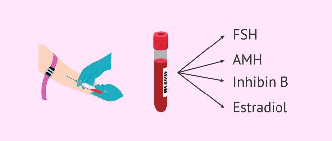 Imagen: Blood hormone test to determine ovarian reserve