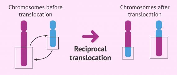 Chromosome fragment exchange