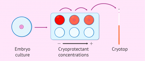 Dehydration of embryos for vitrification