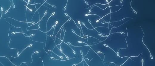 Sperm amount