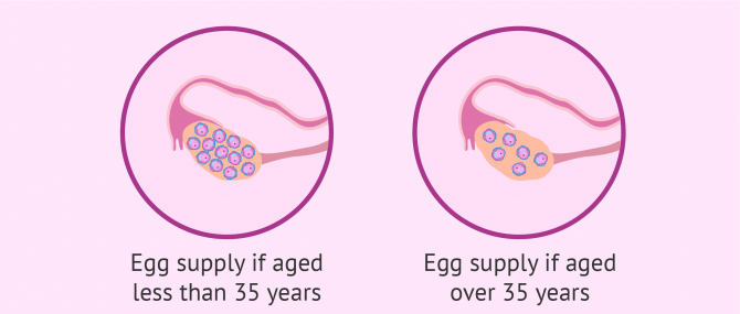 Female egg count by age