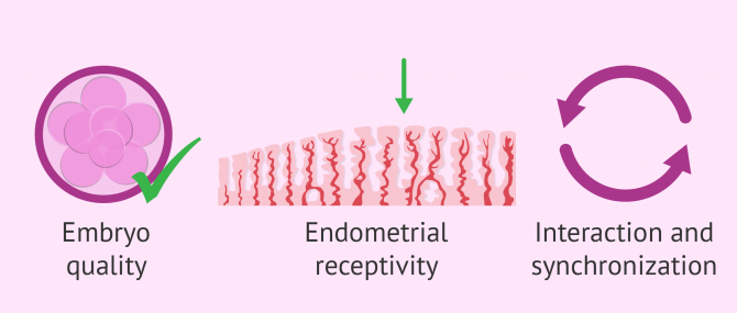 Factors determining embryo implantation