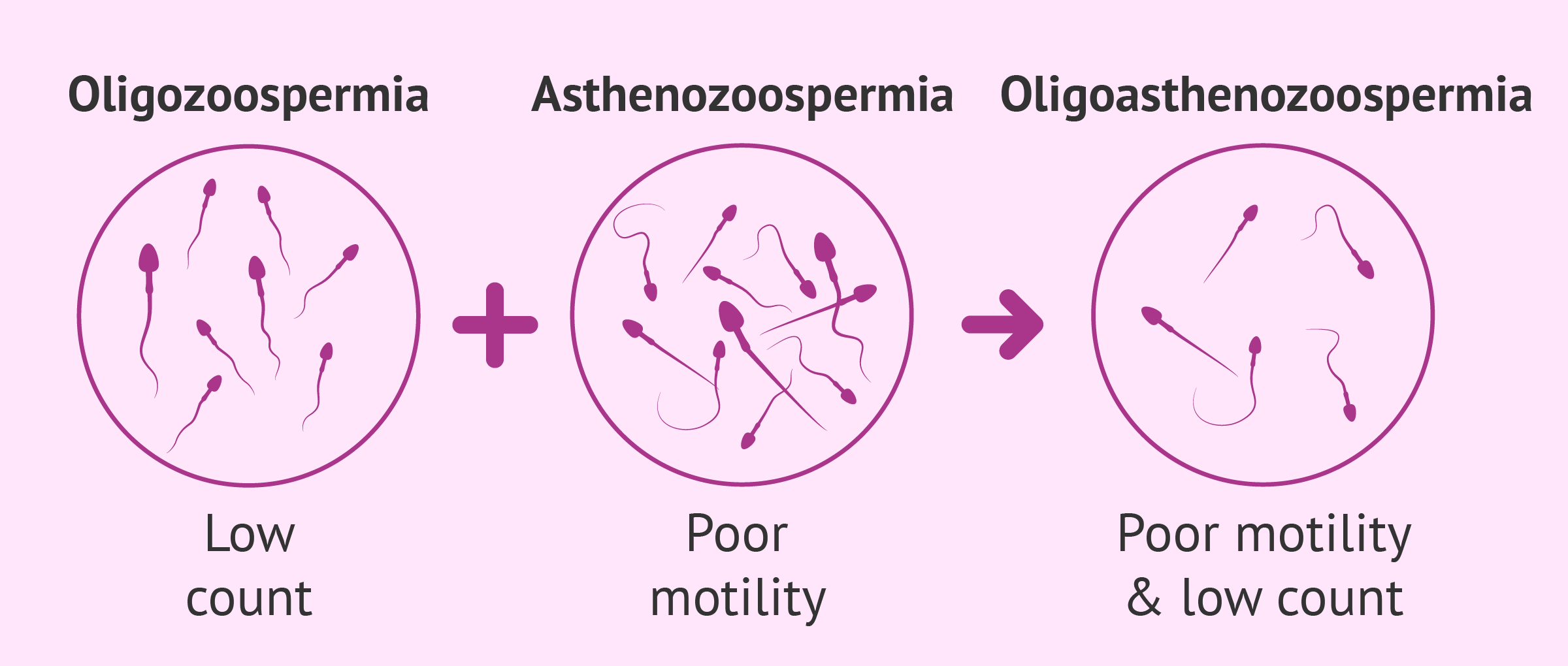 Diagnosis of oligoasthenozoospermia