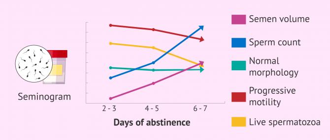 Imagen: How do days of abstinence affect semen quality?