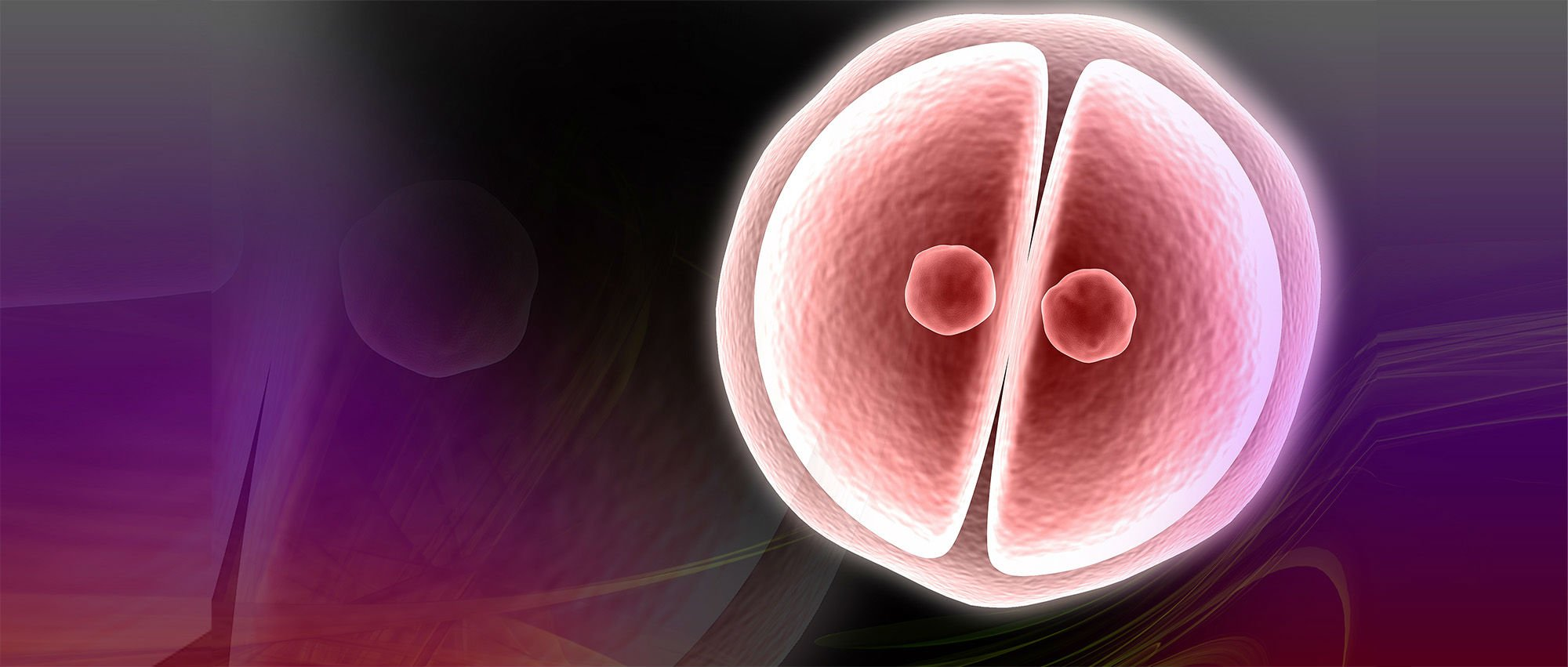 Carrying out the embryo implantation