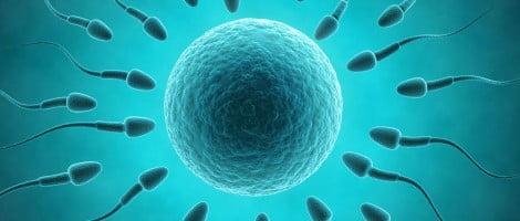 Quanity of sperm