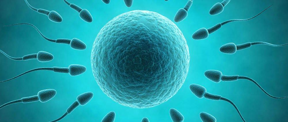 Importance of spermatic volume