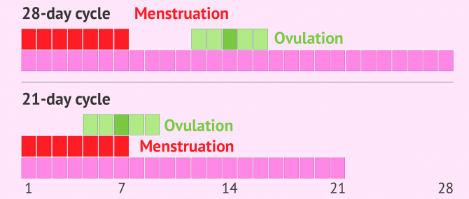 Ovulation and menstruation at the same time