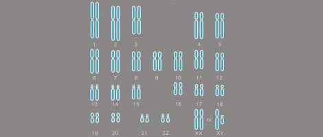 Chromosome pairs