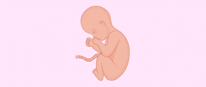 Baby position in 8th month of pregnancy