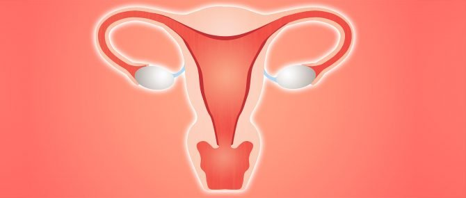 Imagen: Getting the endometrium ready for the embryo transfer