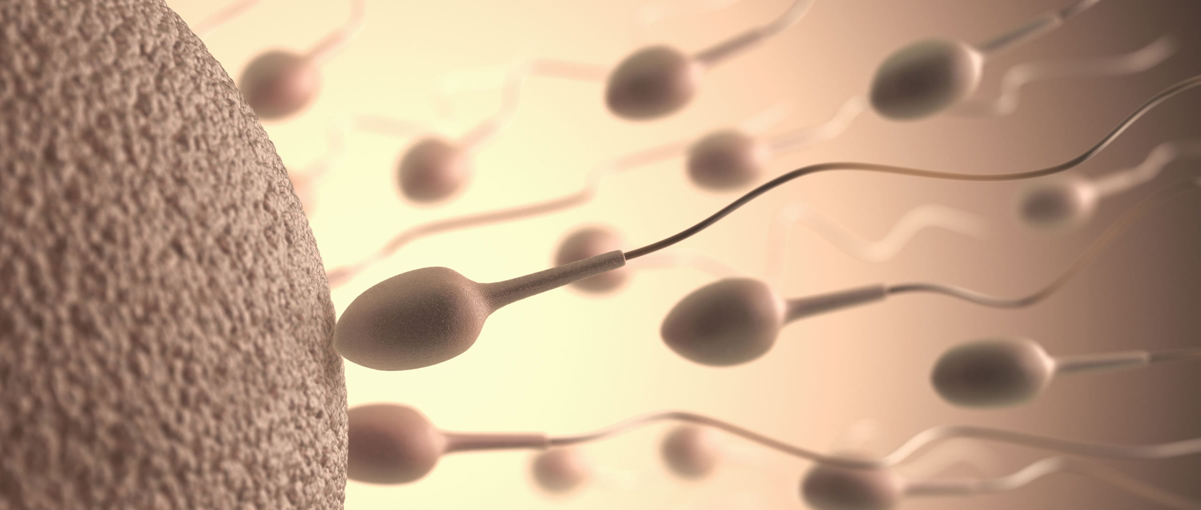 How Does Sperm Donation Work in the USA?