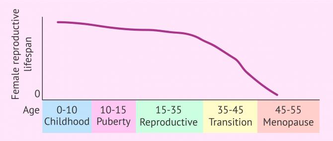 Female reproductive lifespan graph