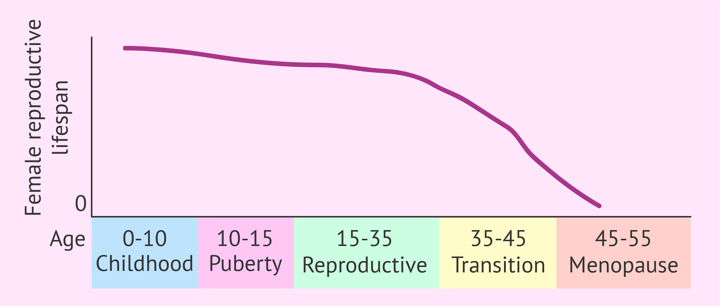 Female reproductive lifespan graph