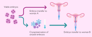 Embryo donation
