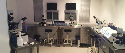 Cape Fertility Clinic South Africa laboratory