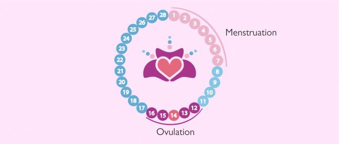 Monitoring your menstrual cycle