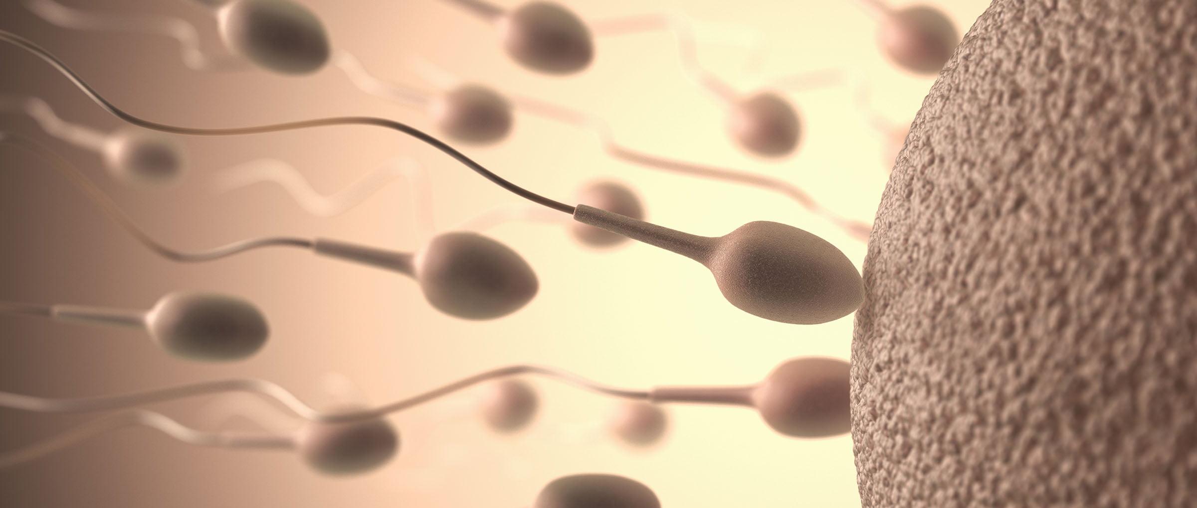 Sperm donation program-2499