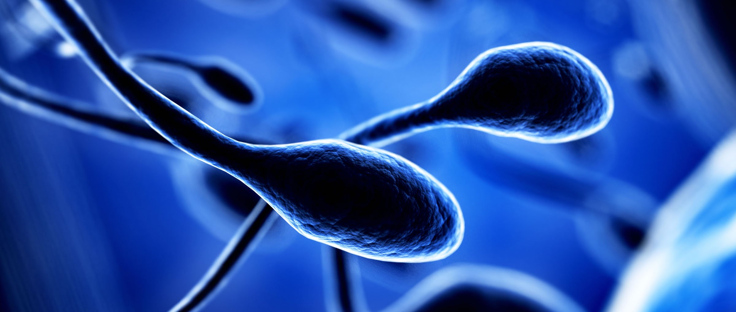 Sperm Donation in Cyprus