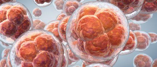 Spare embryos