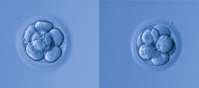 Donation or adoption of spare embryos
