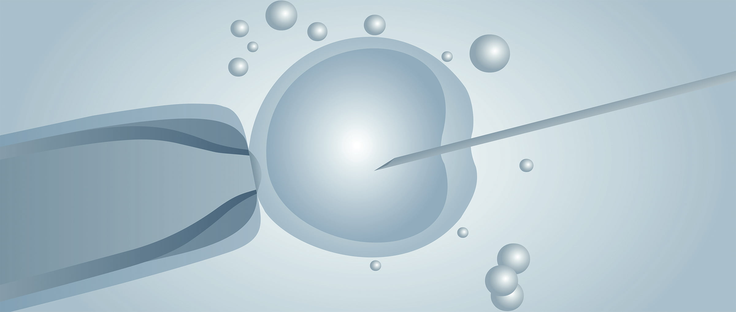 Donor-Egg IVF in the Czech Republic