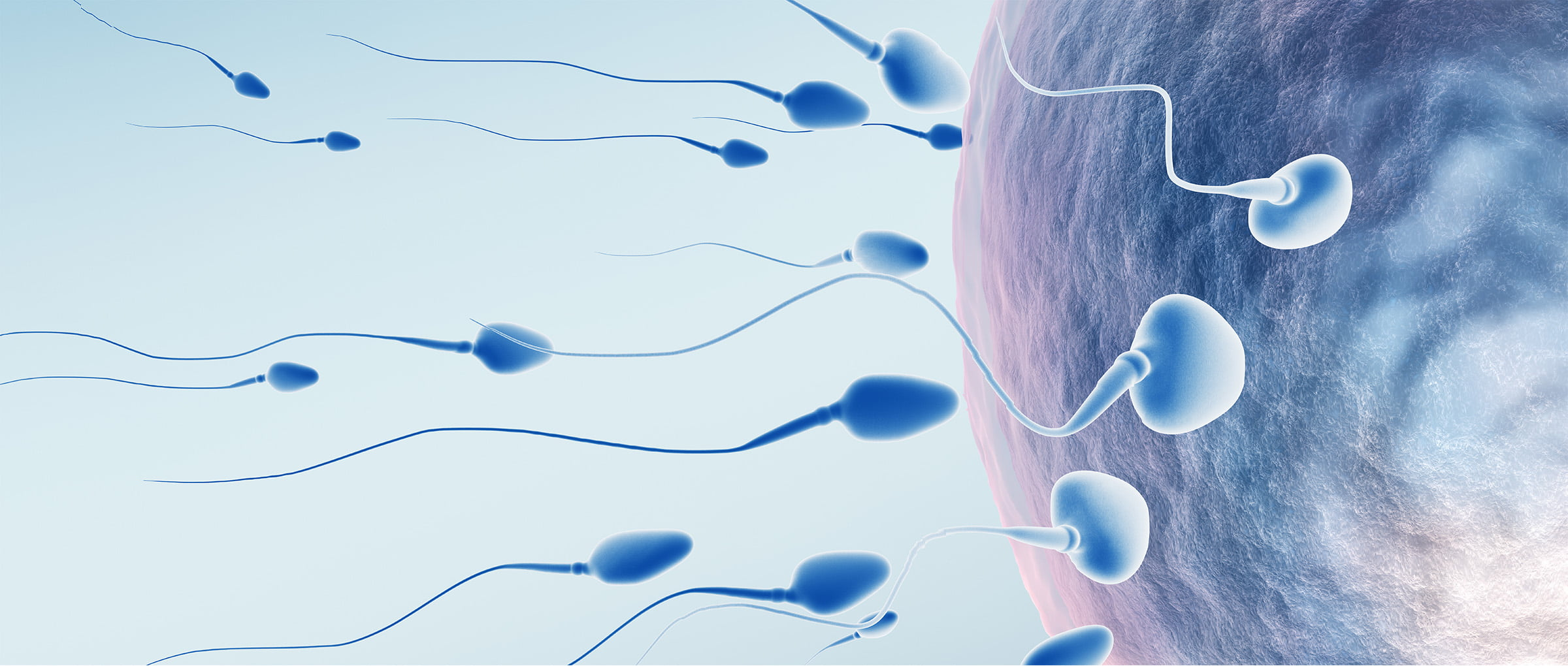 Donor-egg IVF in Denmark