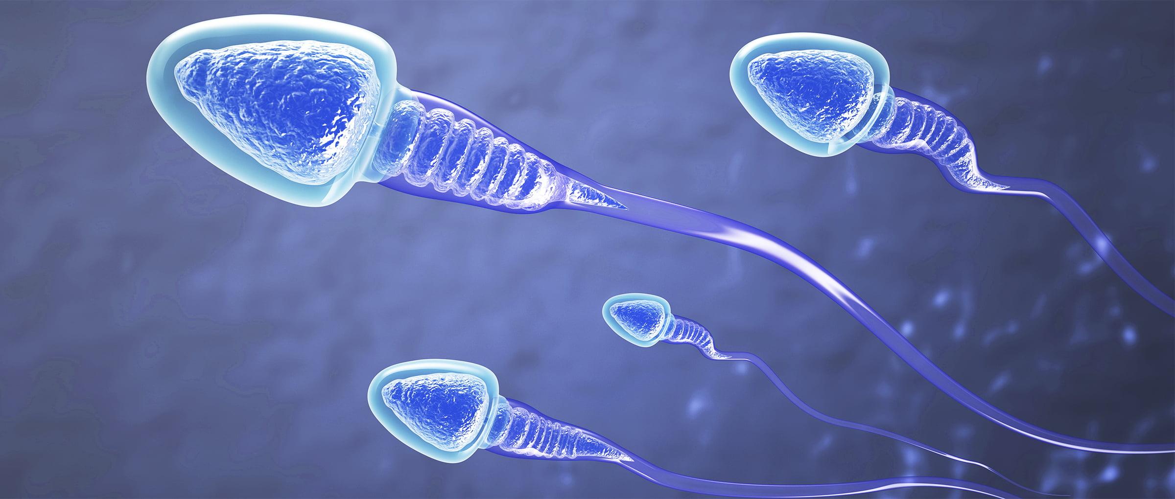 Sperm donation in the Czech Republic