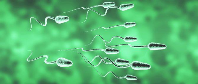 Sperm donation in Ukraine