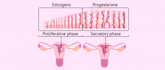 Endometrial growth in donor-egg IVF patients