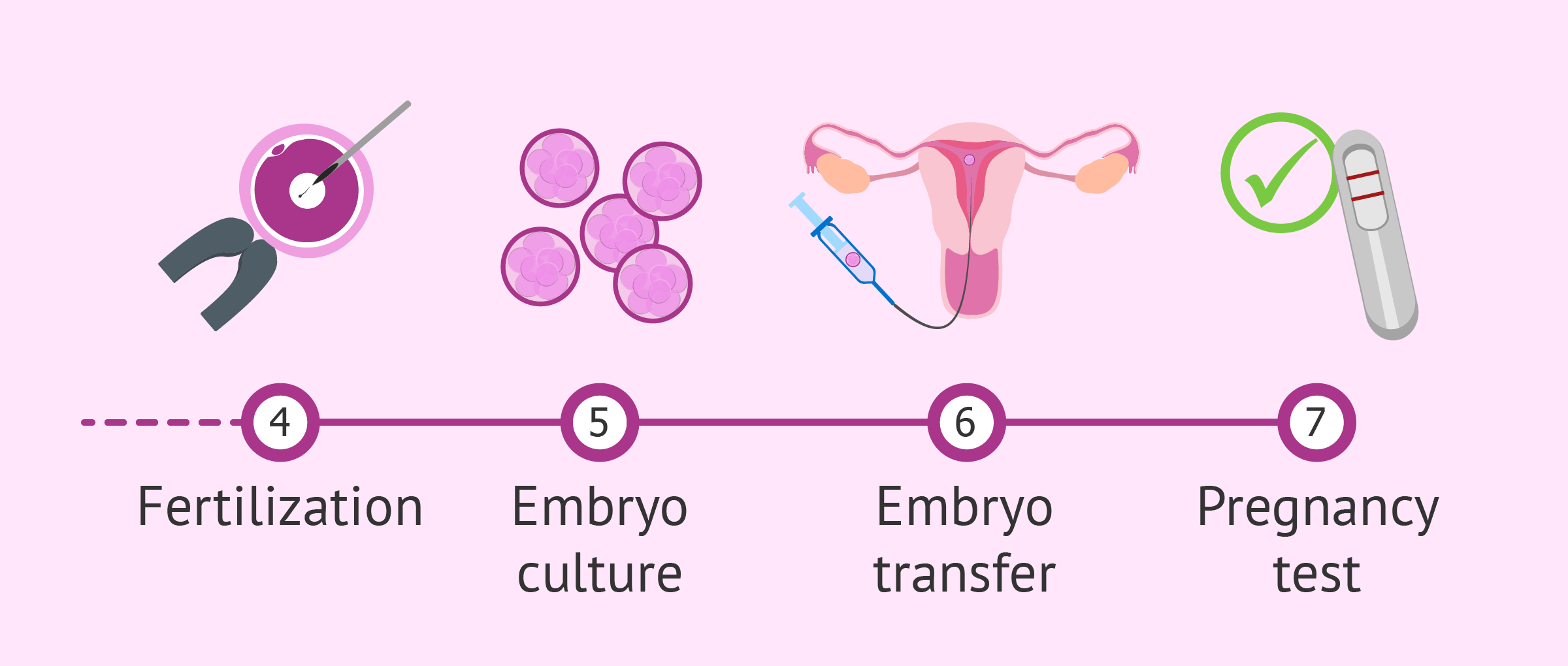 IVF process from fertilization to transfer