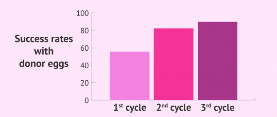 Cumulative success rates per donor-egg cycle