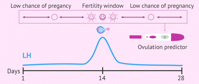How ovulation predictor kits work