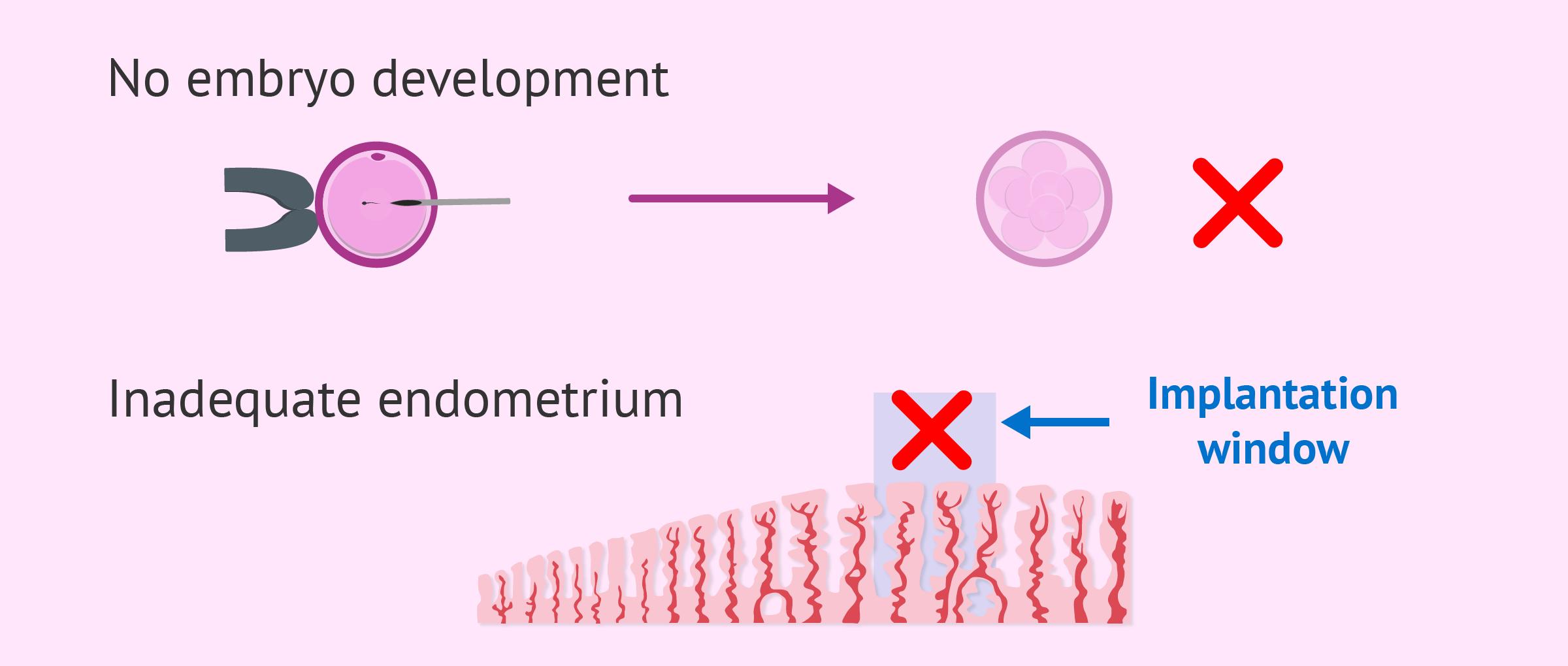 dating by embryo transfer