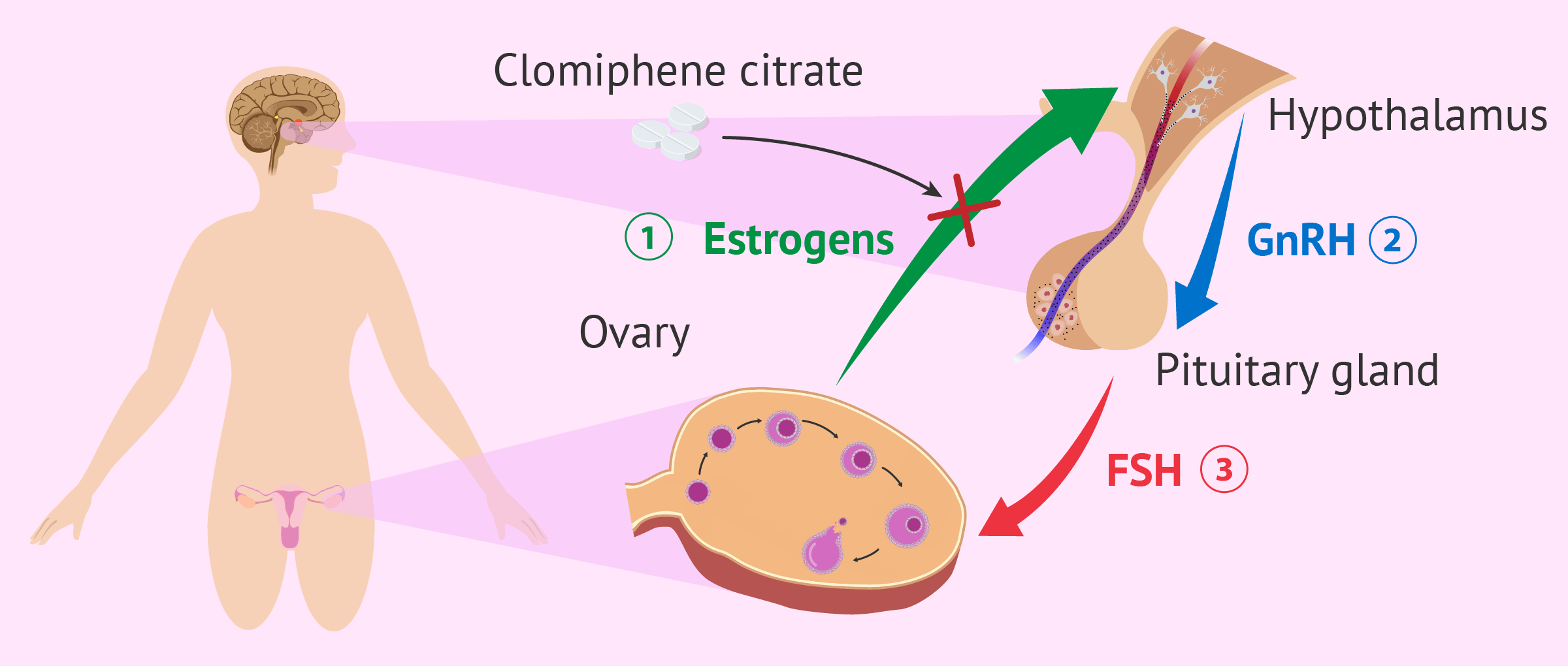 Clomiphene citrate to induce ovulation