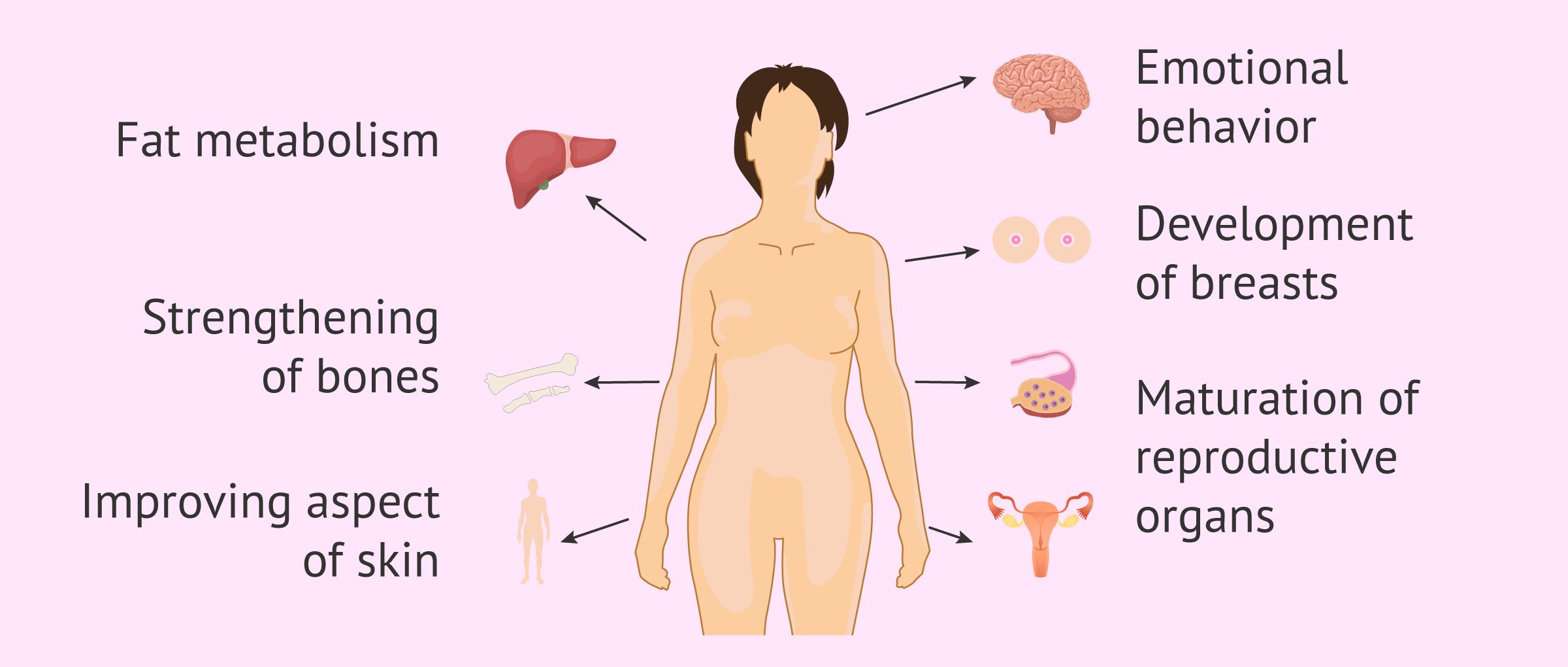 Imagen: Functions of estrogens