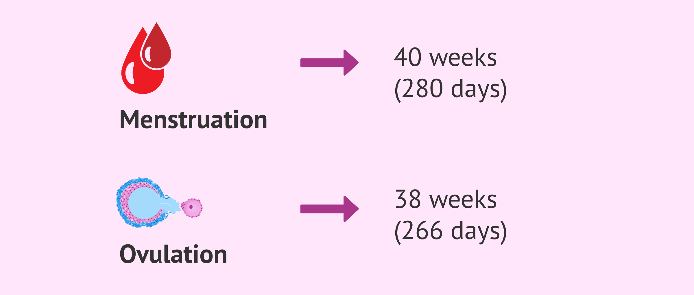 Imagen: Date of delivery from the last menstruation and ovulation