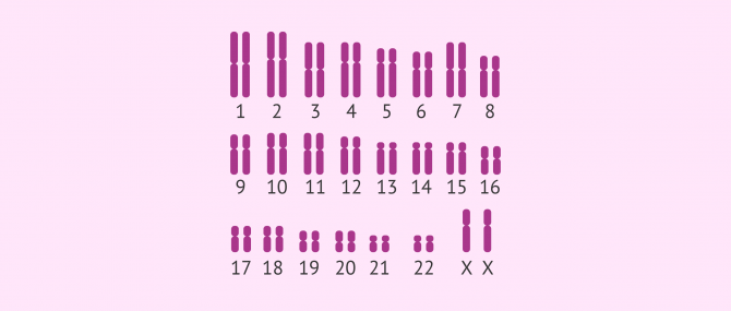 What is a Karyotype?