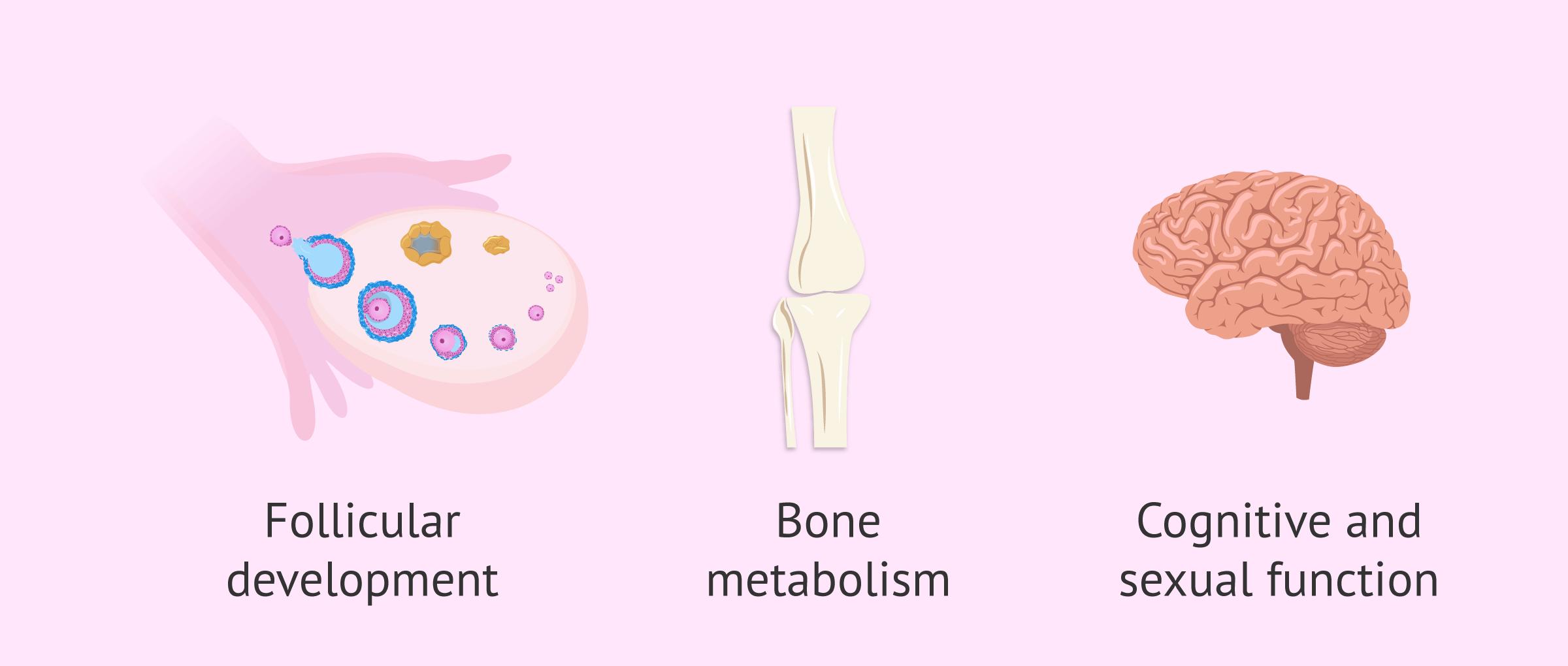 Functions of testosterone in women