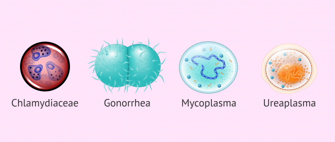 Imagen: Microorganisms that can cause infertility