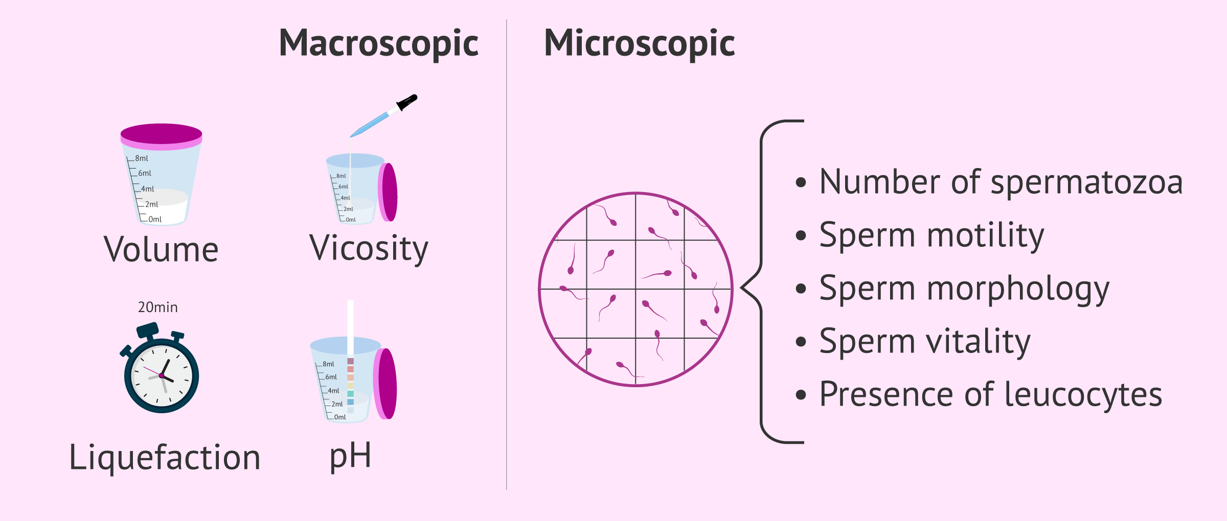 Basic semenogram with macroscopic and microscopic parameters