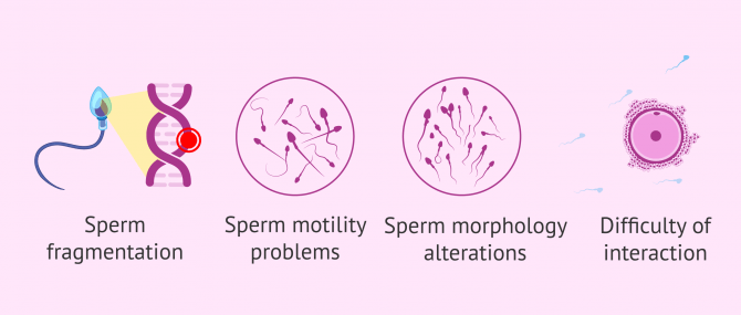 Imagen: Consequences of oxidative stress on sperm