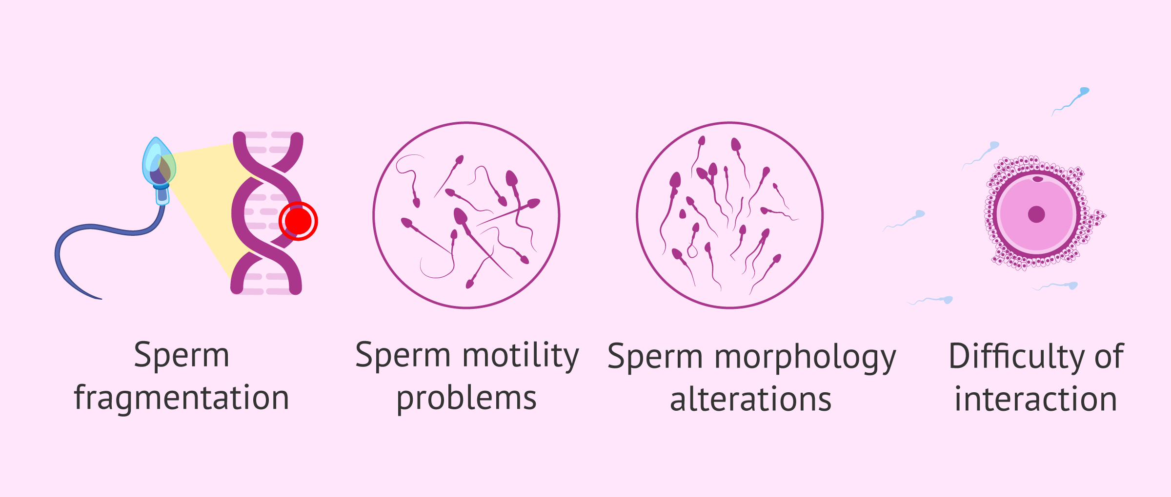 Consequences of oxidative stress on sperm