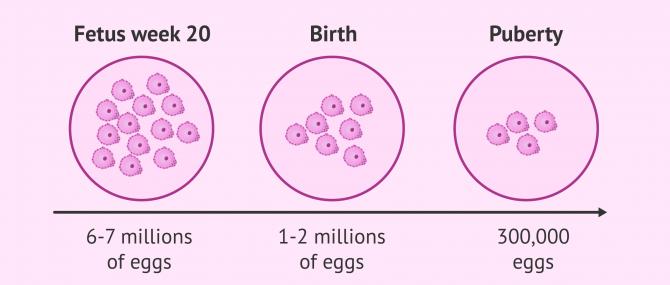 Imagen: Ovarian reserve depletion