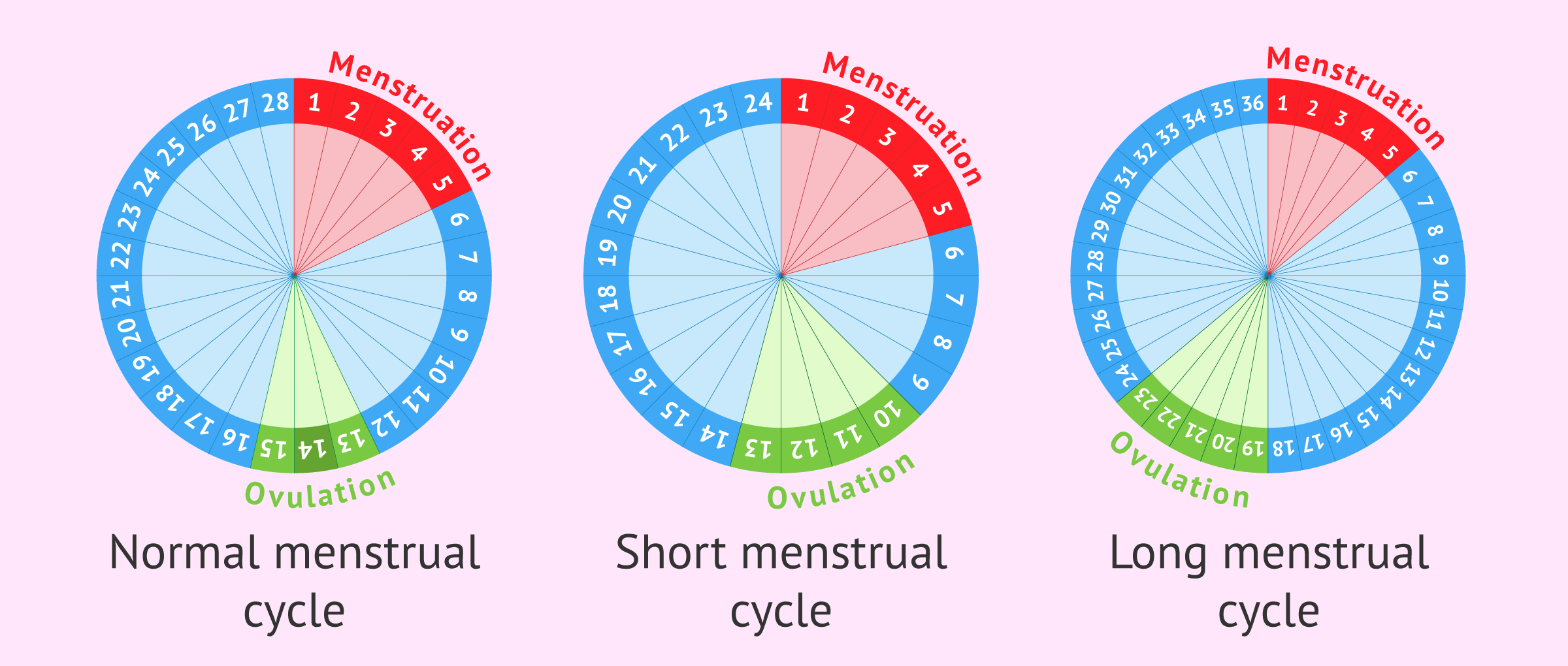 types and length of cycles